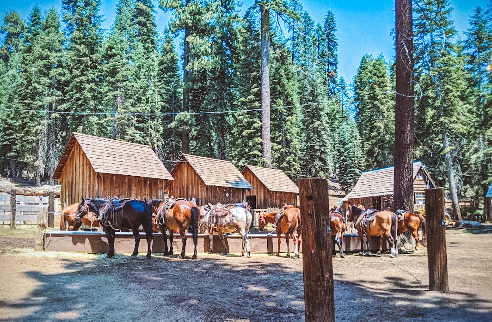 Equines & Earth – June 2021 Day Trip